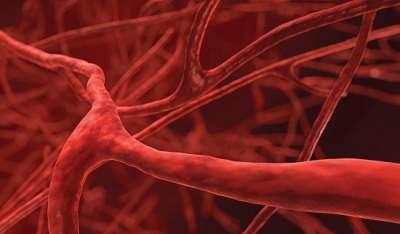 Ученым удалось разработать уникальные бесклеточные сосуды