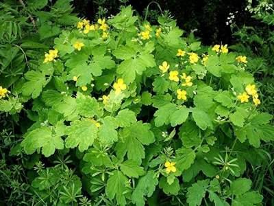 Названо растение, которое может заменить слабительное