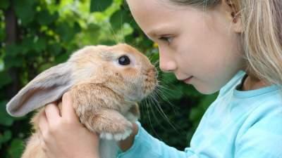 Этими болезнями можно заразиться в контактных зоопарках